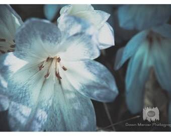 Blue Floral Photo Print Fine Art Flower Photography Floral Photography Flowers Photo Print Blue Decor Wall Print Floral Print Flower Print