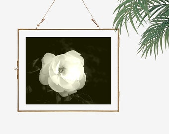 Black and white photography flower photography floral still life monochrome art living room decor bedroom wall art white rose photograph