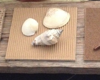 Rustic Beach Shell plaque
