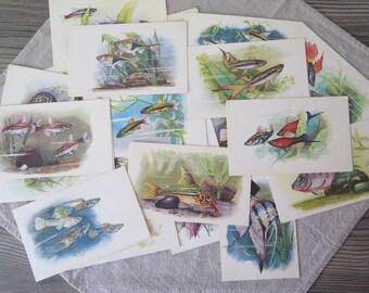 Set of 20 Vintage Fish Postcards, 1968 Sovetskii Hudoznik, USSR Soviet Era Postcards Fauna Russian Illustration @121
