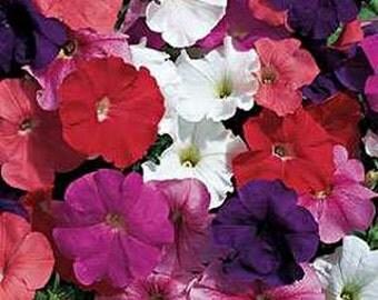Petunias-, Hybrid Mix- 100 seeds each pack