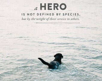 Lessons From the Water bowl - Volume 3 - Prints - A Hero is Not Defined by Species