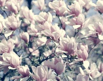 Shabby chic art, floral bedroom art print, magnolia photography, flower photo print, teal pale pink wall art, botanical print girls room art