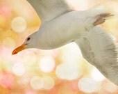 Bird Photography, Bird Print, Beach Decor, Nature Photography, Seagull Photo, Sea Gull Print, Bird Decor, Bokeh Print, Pink and Orange Art