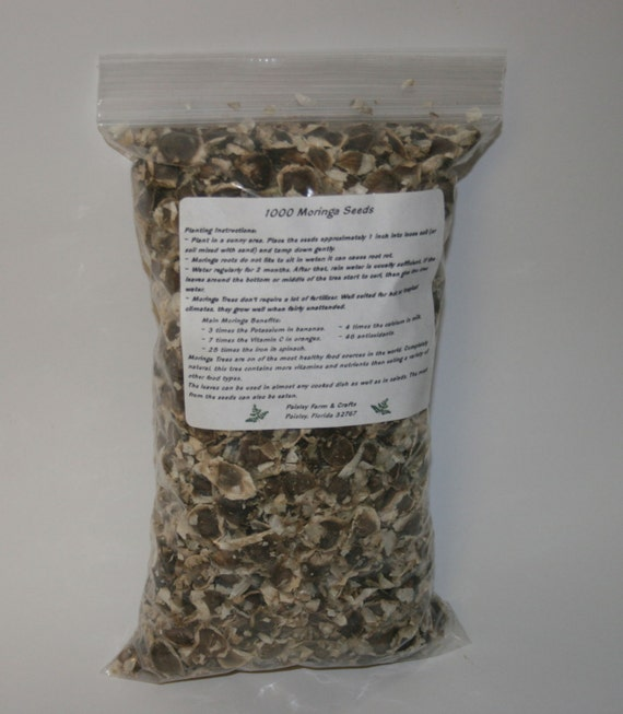Wholesale Moringa Oleifera Seeds - Great Germination - US Customs Cleared!