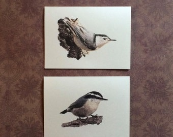 Set of 6 or 12 Handmade Blank Nuthatch Bird Print Note Cards