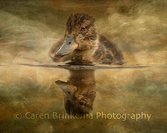 Portrait of a Duckling