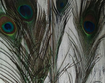 1 Peacock Feather