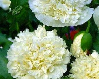 Cream Peony Poppy Flower Seeds / Papaver/ Annual  100+