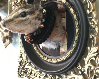 Victorian/ Monarchy Inspired Chipmunk Mount Taxidermy 'Victoria the II'