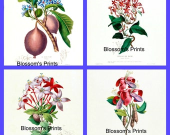A set of four Floral Prints enhanced prints from old publications