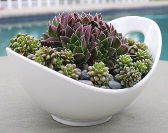 Succulent Arrangement in Contemporary White Porcelain Bowl, Centerpiece, Hens and Chicks