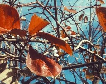 Autumn photography print