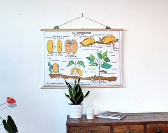 Vintage Original BOTANICAL Chart 2 sides 1974 (french)/AFFICHE BOTANIQUE Vintage Française 2 faces La plante/La germination 1974