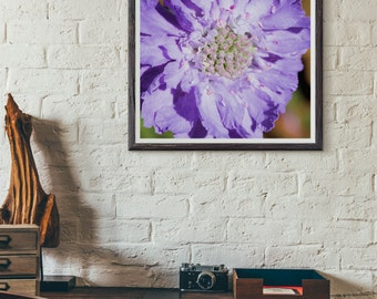 purple flowers, gardens, natural art, nature photography, flower photography, massachusetts, new england photography, fine art print