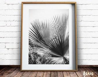 Black and White Palm Tree Print, Tropical Print, Palm Tree Print, Palm Leaves, Fan Palm, Black and White Photo, Leaves Print, Printable Art