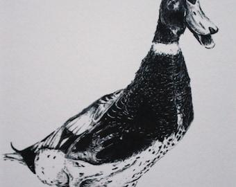 Dudley Duck