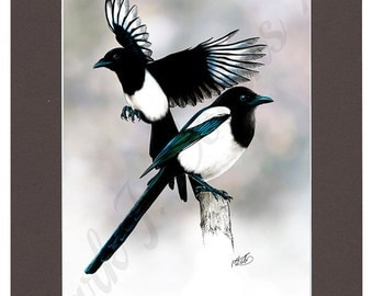 """6"""" × 9"""" Magpies print  in A4 Sepia mount. 6""""×9"""" print on watercolour paper."""