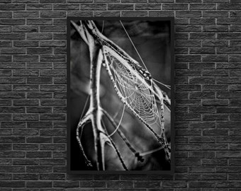 Cobweb Photo - Spider Web Photo - Branch Photo - Vertical - Black and White - Nature Wall Art - Nature Wall Decor - Living Room Decor