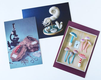3 Postcard Set: Unnatural History Museum collection - mushroom insect ammonite squid needlefelt biology photography science nature art