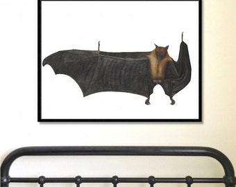 Antique Bat Print   Great Indian Fruit Bat   Antique Bat Print   animal print   animal decor   home decor   wall art   halloween art   bats