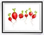 1. Fresh Radishes Fine Art PRINT / Watercolor painting Botanical vegetable garden / Red artwork / Cook gardener Gift / Kitchen wall decor K