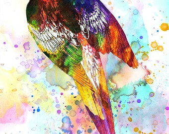 """Painted Parrot - 11"""" x 14"""" Nature Inspired Digital Watercolor & Pencil Fine Art Print by Kenneth Rougeau"""