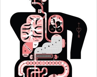 "Male Anatomy Chart 17x22"" Art Print by Raymond Biesinger"