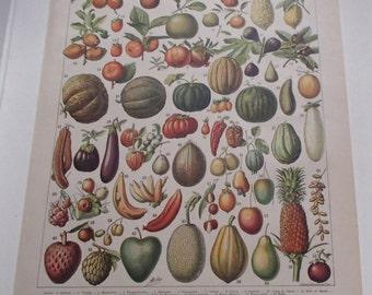 French Fruits Print Larousse Encyclopedia Circa 1900