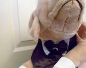 Dog Tuxedo ring bearer attendant medium size wedding pet canine attendant bridesmaid ring bearer ivory