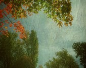 Autumn Fog _ Michelle Anderson fine art _ TheCamerasEye _ trees, fall, View from Forest Lawn Cemetery, Buffalo NY, Original digital art