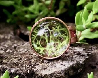 Moss Terrarium Ring