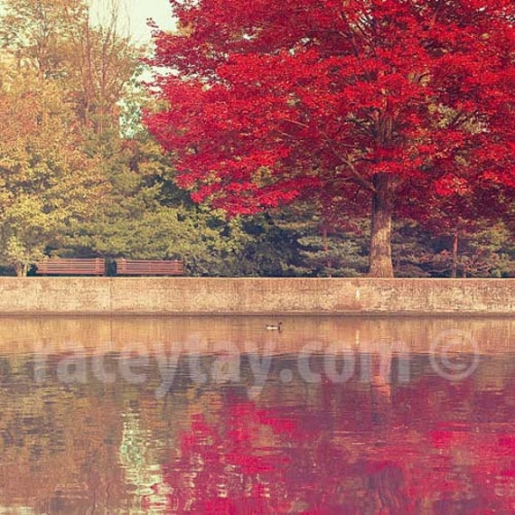 Ottawa Rideau Canal,  Nature Photography, Red, Green, Fall, Autumn, Burgundy, Olive Green, Rustic Decor