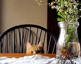 Charlie the Cat plays Peek-A-Boo - Blank Greeting Card - For Anyone who Has Ever Loved a Cat