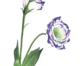 Lisianthus watercolour painting print, 5 by 7, L9416, contemporary wall art, flower print, Lisianthus print, Lisianthus watercolor painting