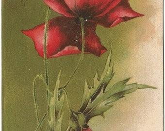 Deep Red Poppy Flower Best Wishes Vintage Postcard
