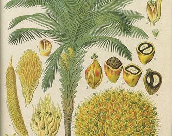 Palm Tree Botanical print vintage illustration Digital Download