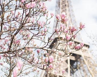 Paris Photograph - Eiffel Tower and Magnolia,Travel Photograph, French Urban Home Decor, Large Wall Art