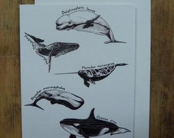Whale greetings card with white envelope, 11 x 13cm, whale illustration, latin whale names, whale art, blank inside, recycled card
