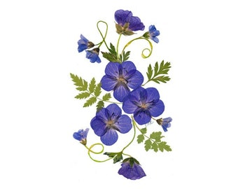 Set of 6 Notecards -  Pressed Flower Cards - Hardy Geraniums - #022