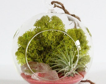 Terrarium Kit - Air Plant, Clear Quartz Crystals, and Salmon / Pink Sand