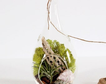"Rose Quartz and Pyrite Air Plant Terrarium Kit with Chartreuse Moss - 8.5"" Teardrop"