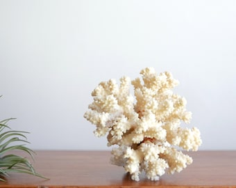Vintage white coral branch - cabinet of curiosities
