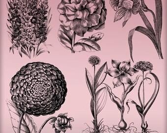 Vintage Floral Digital Stamps Overlays - 5 PNG Images Vintage Botanicals - Digital Stamps Clip Art - High Quality Spring Floral Clipart