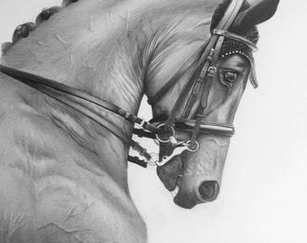 Original horse graphite pencil drawing-dressage