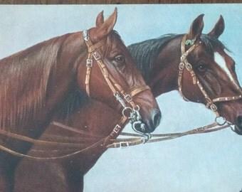 Antique HORSE postcard artist signed