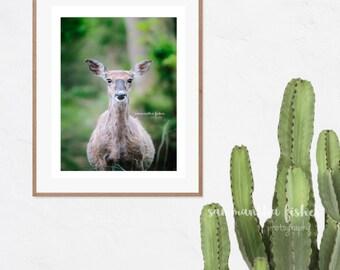 Deer Photography, White Tail Deer, Wildlife Artwork, Animal Print, Deer, Wildlife Photography, Nature