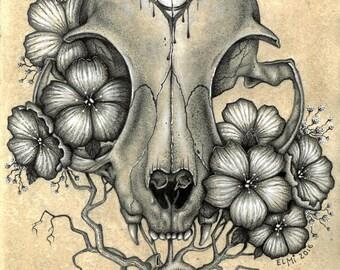 Cat Skull Pencil and Pen Drawing Print