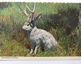The Fabulous Jackalope Postcard Great West Oddity Mythical Animal Vintage Postcard