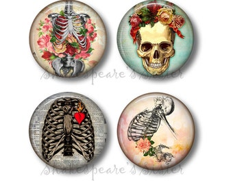 Human Anatomy - Fridge Magnets - Skeleton Magnets - 4 Magnets - 1.5 Inch Magnets - Kitchen Magnets